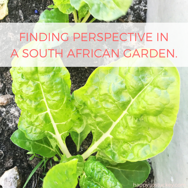 Finding Perspective in a South African Garden.